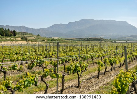 View of vineyards in La Rioja (Spain)