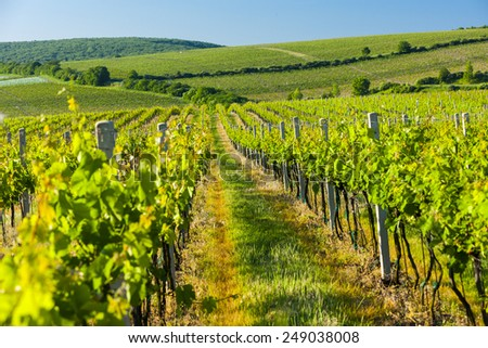 view of vineyards near Palava, Czech Republic - stock photo