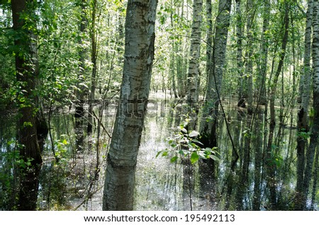 view of water flooded forest summer morning
