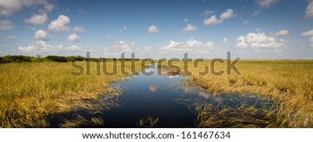 View of wetlands florida everglades - stock photo