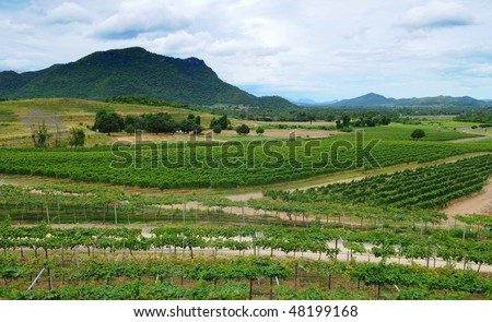 View of Winery in Thailand - stock photo