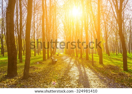 View on Autumn Park Alley with Trees on Green Grass and Road from Brick Covered Dry Foliage Lighted by the Rays of the Sun - stock photo