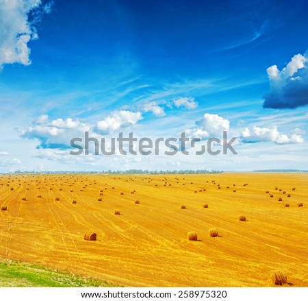 view on harvested field of wheat with many bales of straw and beautiful blue sky  - stock photo