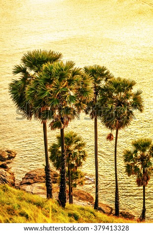 View on sunset sea and palms on hill. Nature background
