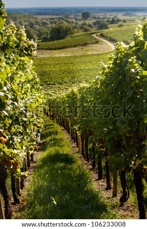 View on the famous wine route in Alsace France
