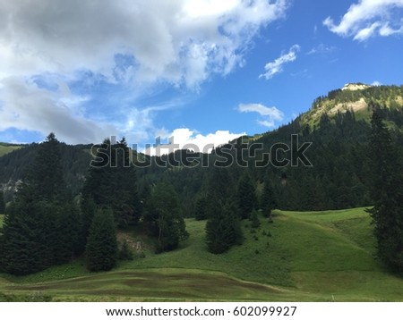View on the Mountain, landscape in Summer, tree