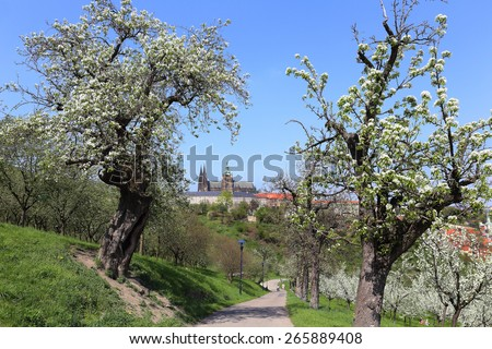 View on the spring Prague gothic Castle with green Nature and flowering Trees, Czech Republic