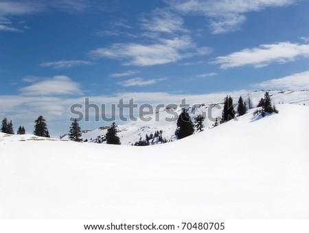 View on  winter tree boron /  mountain ski center Kopoaonik Serbia / wide landscape - stock photo
