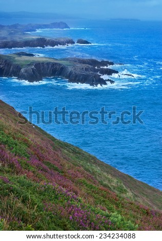 View over cliffs on flowery coastline in Republic of Ireland - stock photo