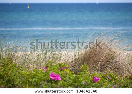 View over dune grass on the German Baltic Sea and the coast - stock photo