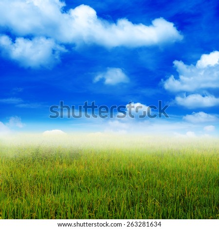 View over rice field plantation farming and sky - stock photo