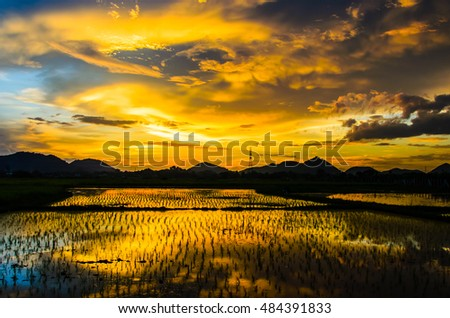 View the newly planted rice with background mountain in evening.
