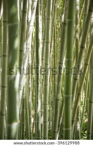 View through an forest of green canes of bamboo - stock photo
