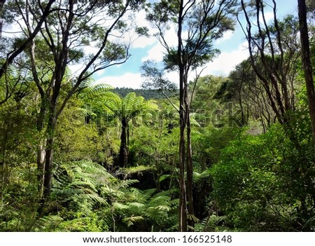 View through the treetops of native bushland in the Okura Bush Scenic Reserve near Auckland with - stock photo
