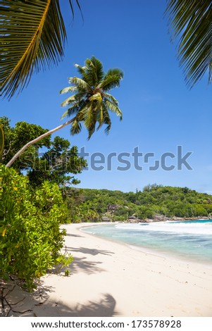 view to a lonesome white beach with tropical palms and trees, a turquoise sea and a blue sky, Mahe, Seychelles, Africa