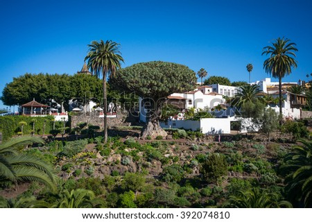 View to botanical garden and famous millennial tree Drago in Icod de los VInos, Tenerife, Canary Islands - stock photo
