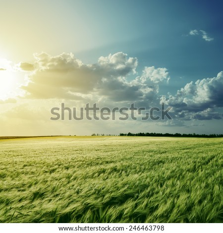 view to green field with harvest under cloudy sunset - stock photo
