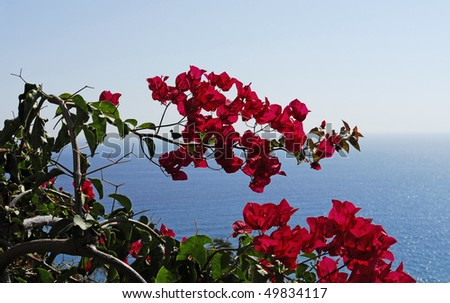 view to sea and bougainvillea flowers - stock photo