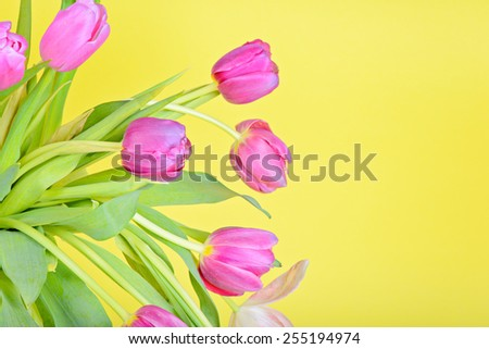 View to the easter pink tulips over yellow paper - stock photo