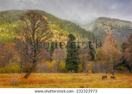 View to tree and horses near snow covered colorful foothills of caucasus mountains in autumn, Arkhyz, Karachay-Cherkessia, Russia