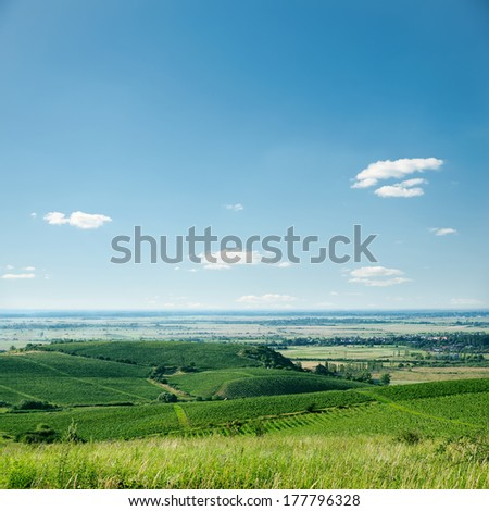 view to vineyard and blue sky - stock photo