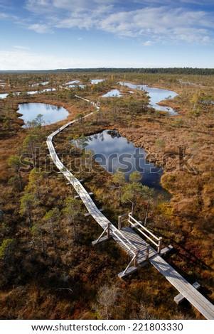 View to walking trail in swamp, Kremeri National Park in Latvia - stock photo