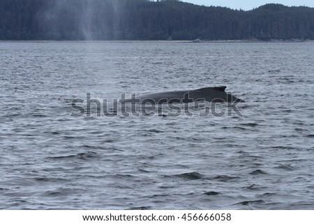 Viewing whales inside passage, Alaska - stock photo