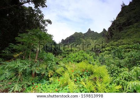 Views from Limahuli gardens, Kauai island - stock photo