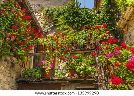 Villa a Sesta (Siena, Chianti, Tuscany, Italy) - Old house with potted plants and flowers - stock photo