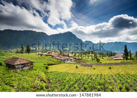 Village at Mount Bromo in Bromo Tengger Semeru National Park, East Java, Indonesia.  - stock photo