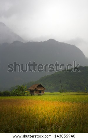 Village hut in valley field in Lac Village, Mai Chau, Vietnam