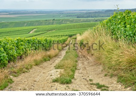 Village road between vineyards in Champagne-Ardenne, France