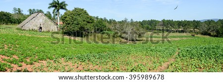 Vinales, Cuba - 25 january 2016: woman in front of her farm at the tobacco plantation in the Vinales valley, north of Cuba