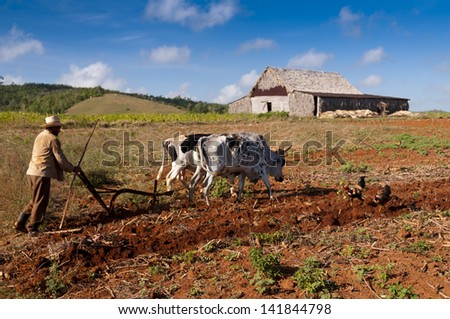 VINALES, CUBA - MARCH 22nd 2012: Cuban farmer plows his field with two oxen on March 22nd in Vinales, Cuba. - stock photo