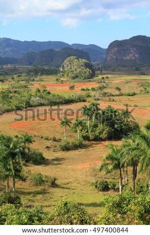 Vinales National Park in Cuba. Natural landscape with palm trees.