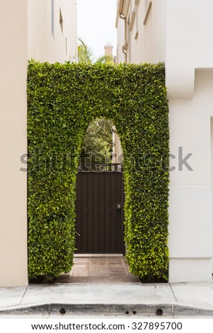 Vine covered archway - stock photo
