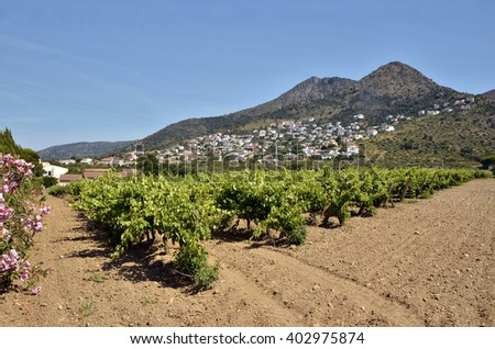 Vine in the Roses region, or Rosas, and the hinterland in the background. Roses is a commune on the Costa Brava at northeastern Catalonia in Spain - stock photo