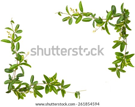 Vine leaves with small flower frame isolated on white background - stock photo