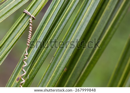 vine roots with coconut leaf. - stock photo