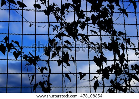 Vines climb along mesh steel. In black and white.