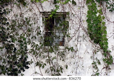 Vines growing over a shed and window. - stock photo