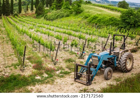 Vines on the field and a blue tractor - stock photo