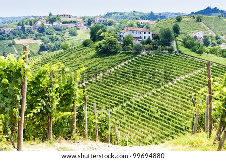vineyar near Tana, Asti Region, Piedmont, Italy - stock photo