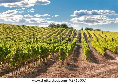 Vineyard and hills, Catalonia, Spain - stock photo