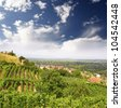 Vineyard and hills, Tokaj - Unesco World Heritage Site, Hungary - stock photo
