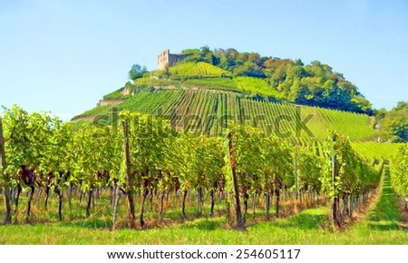 vineyard and old castle, staufen, germany  - illustration based on own photo image
