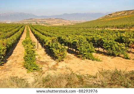 Vineyard at Autumn, La Rioja (Spain) - stock photo