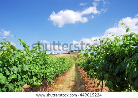 Vineyard at Portugal,Estremoz, Alentejo region
