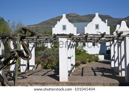 Vineyard at Reinet House in Graaff-Reinet, Eastern Cape, South Africa  Historic building, built circa 1812 in classical Cape style  Now a museum - stock photo