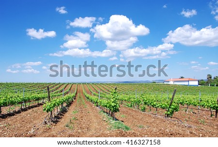 vineyard at south of Portugal, Alentejo region